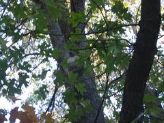 2003-10-05 163522