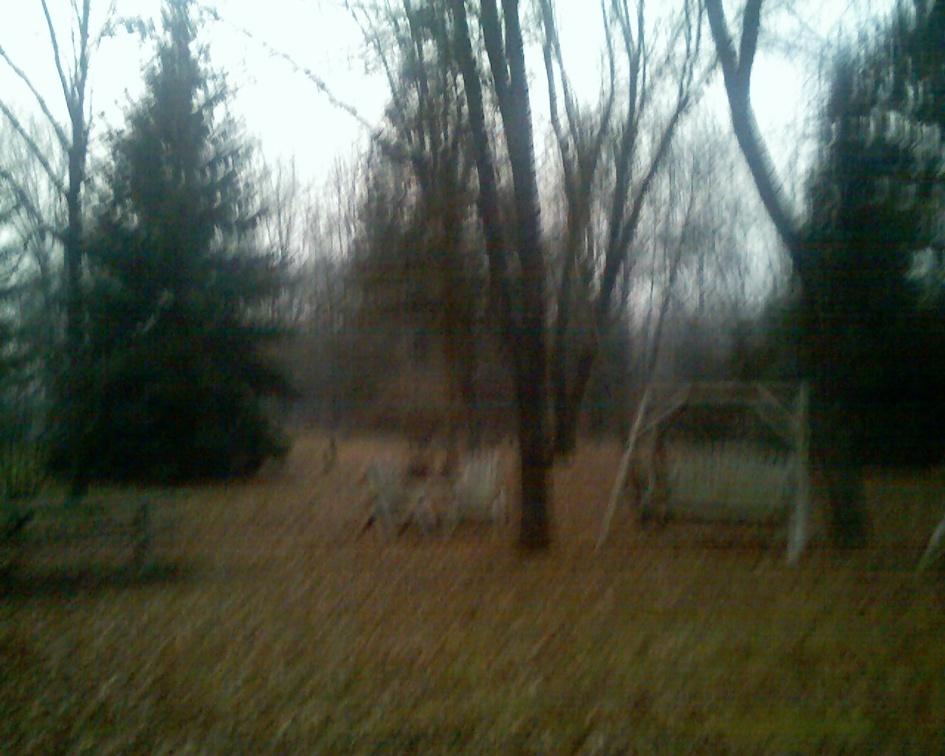 2006-11-26_125306.jpg